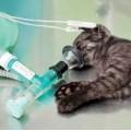 Anestesiologia Vet