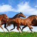Equinos: medicina y produccion