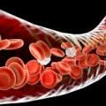 Hematologia y Citologia Vet