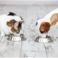 Nutricion y Alimentacion Vet
