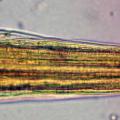Parasitologia Vet